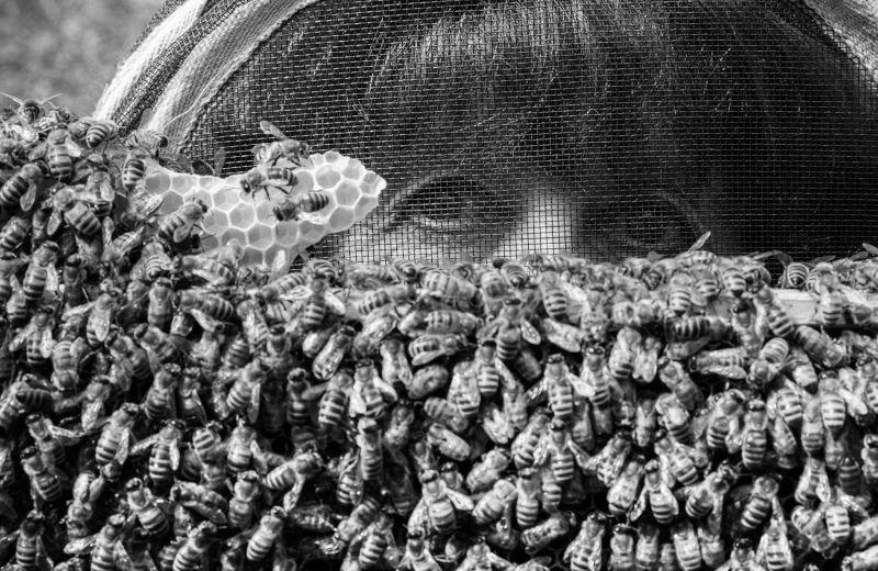 elsiebee